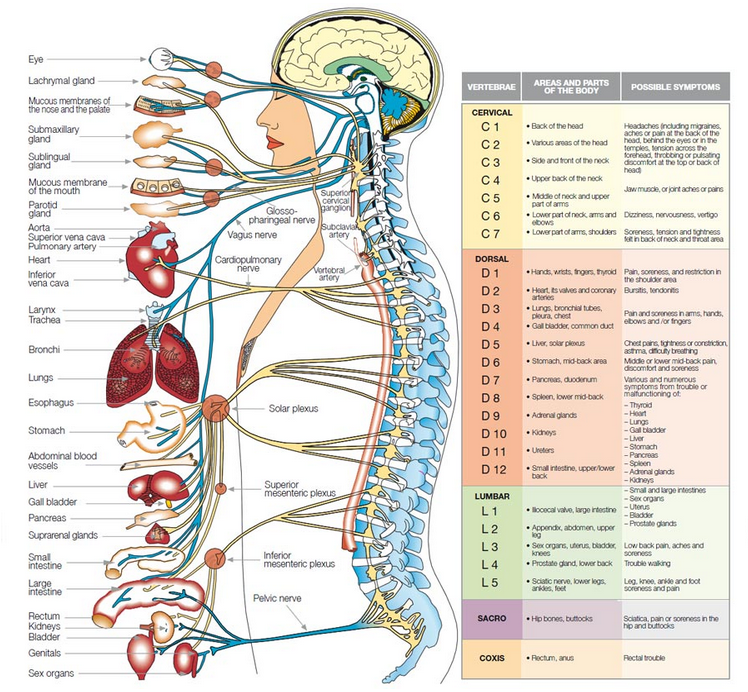 About Chiropractic - Upper Cervical Chiropractic San Diego
